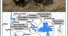 Feds Want to Avoid 'Endangered' Listing for Sage Grouse, Jewell Says